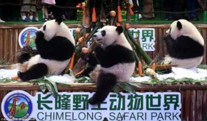 Chimelong Safari Park, Guangzhou